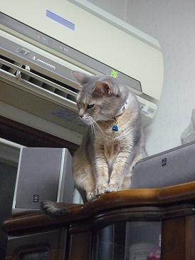 颯 猫じゃらし 3