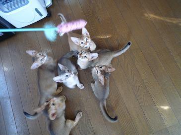 猫じゃらし 1