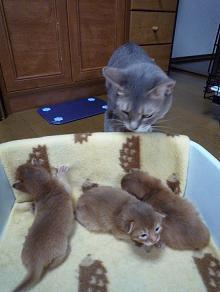 野次猫 4