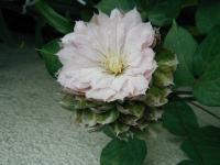 春姫1801