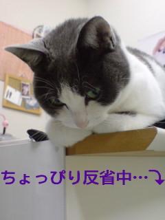 20081110001529.jpg