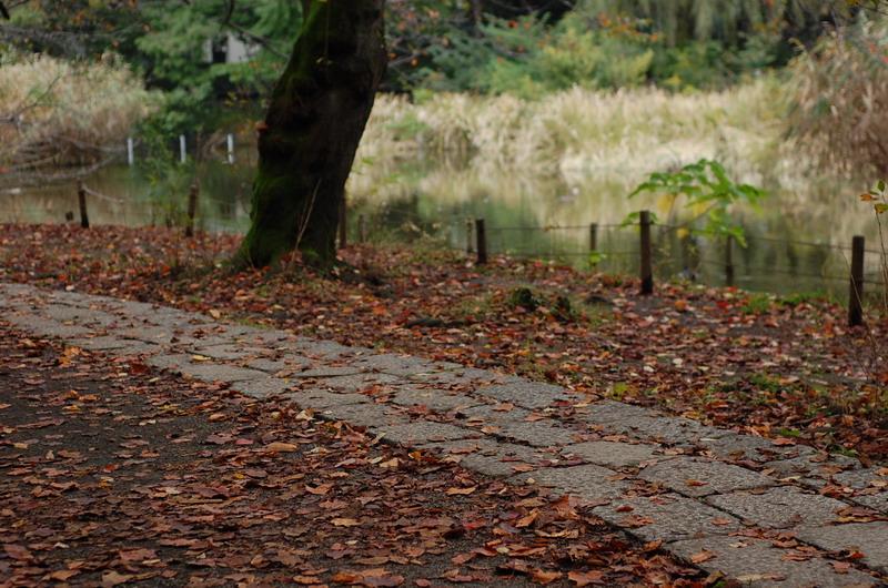 下池の遊歩道