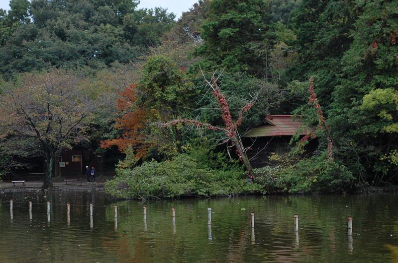 小島の神社