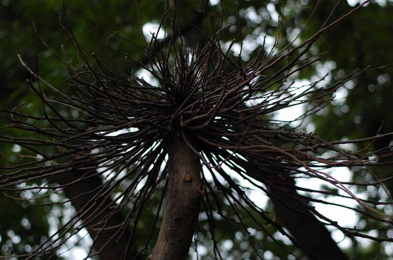 トロールの森3