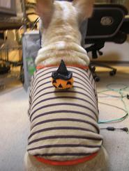 Halloween 画像 050 (15)