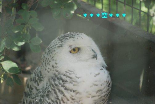 zoo15-35.jpg