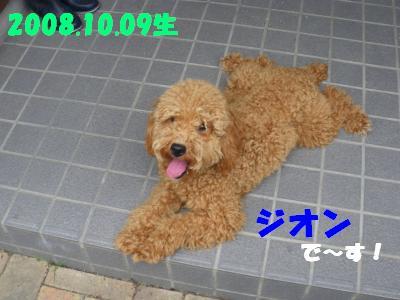 IMGP1085.jpg