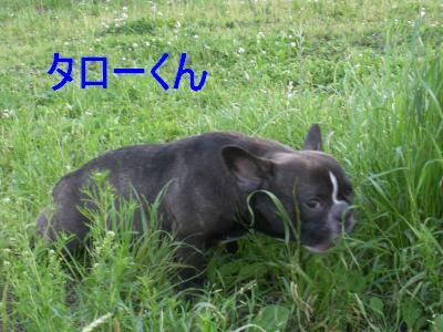 taro-chan.jpg