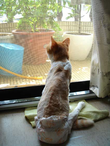 出門前興奮地看著窗外小鳥,渾然不覺大難臨頭