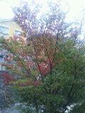 二階からのけやき201110