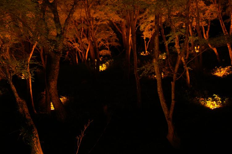 香嵐渓 夜 ライト 紅葉 2007