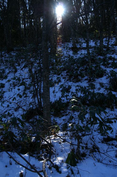 雪 木漏れ日 光 太陽
