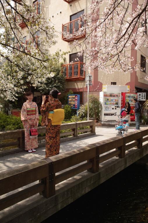 京都 高瀬川 ソメイヨシノ サクラ 着物 スナップ 橋