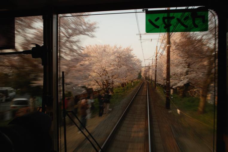 京都 京福電気鉄道 北野線 鳴滝 宇多野 桜並木 サクラ 夕焼け 車窓 ワンマン