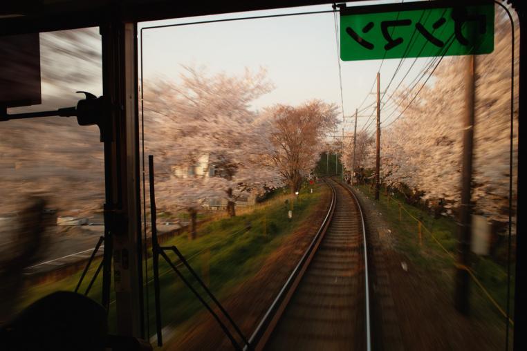 京都 京福電気鉄道 北野線 鳴滝 宇多野 桜並木 サクラ 夕方 車窓 ワンマン 単線