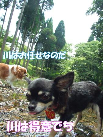 2008fukui (42)0000