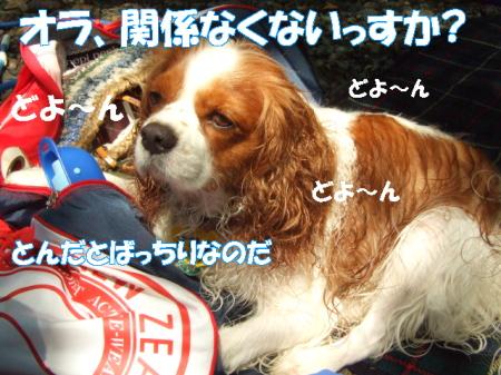 2008fukui (80)0001