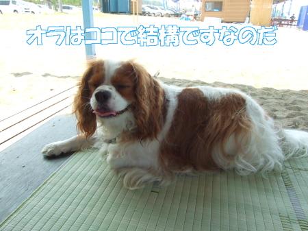 2008fukui (144)