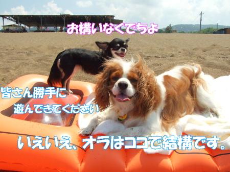 2008fukui (154)0000