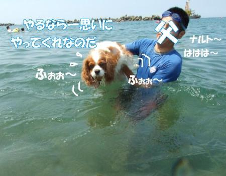 2008fukui (184)