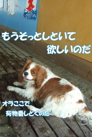 2008fukui (202)0000
