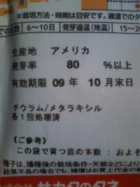 2-3ほうれん草種