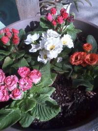 2-19花