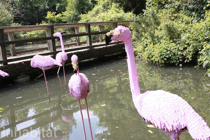 bronx-zoo-lego-flamingos.jpeg