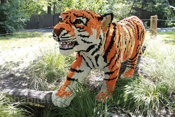 bronx-zoo-lego-tiger.jpeg