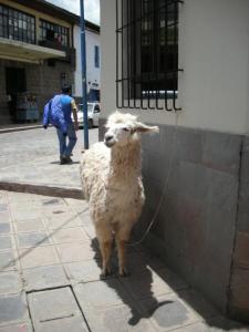 Cuzco no.5
