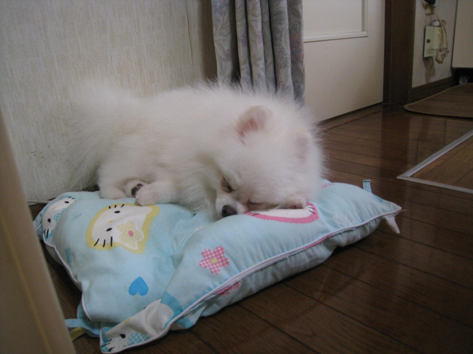 キティ座布団で寝るらい