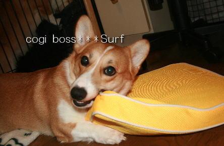 surfboss.jpg