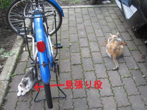 004-1_convert_20110810005821.jpg
