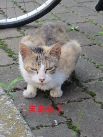 007-1_convert_20110810004138.jpg