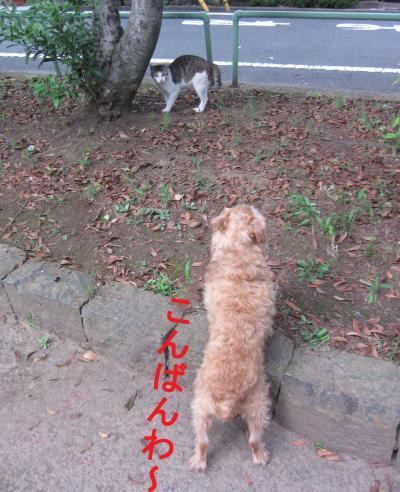 010-1-2-33_convert_20110807050504.jpg