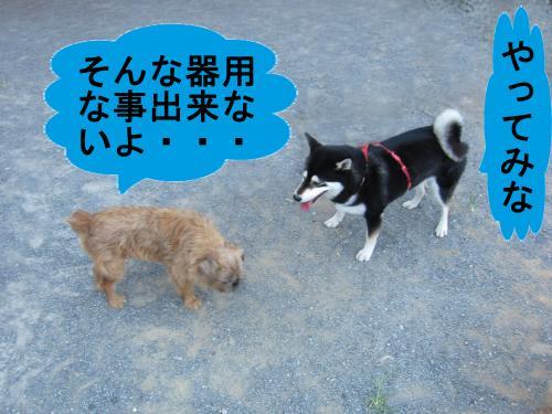 011-1-2_convert_20110815002232.jpg