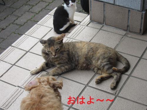 016-1_convert_20110816234945.jpg