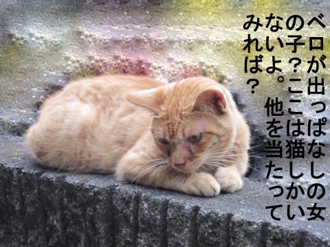019-1_convert_20110722002133.jpg