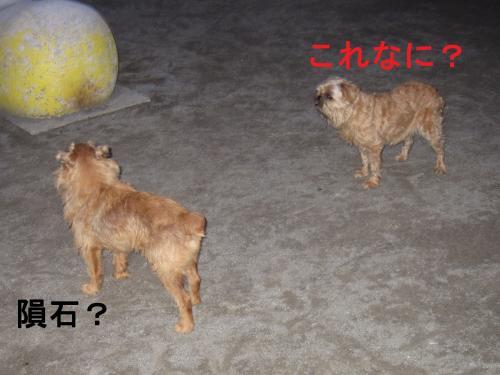 034-111_convert_20110801010957.jpg