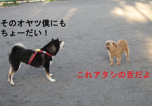 037-1-2_convert_20110806011732.jpg