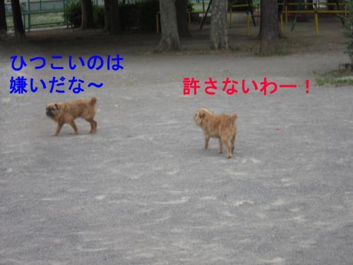 073-4-4_convert_20110802005620.jpg