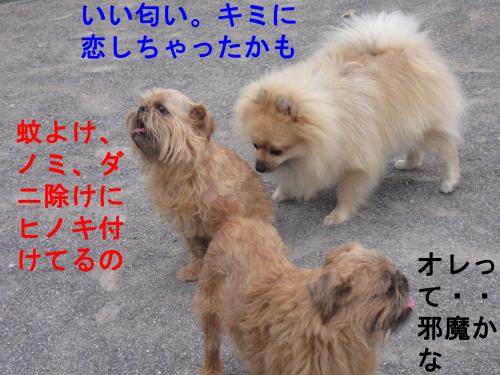 099-4444_convert_20110730030911.jpg