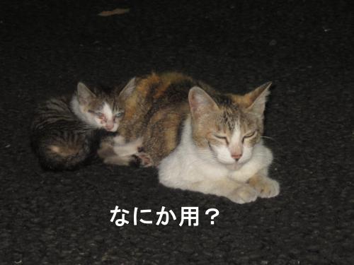 neko4_convert_20110720005142.jpg
