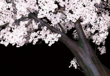 夜桜。。。