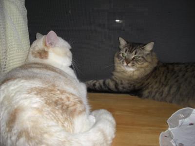 ネコ会議w