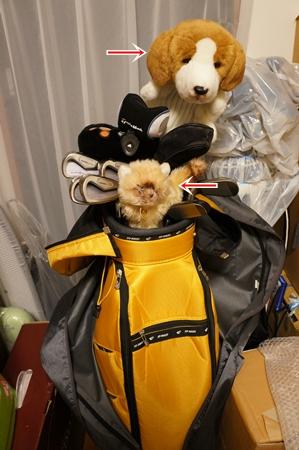犬と猫のヘッドカバー