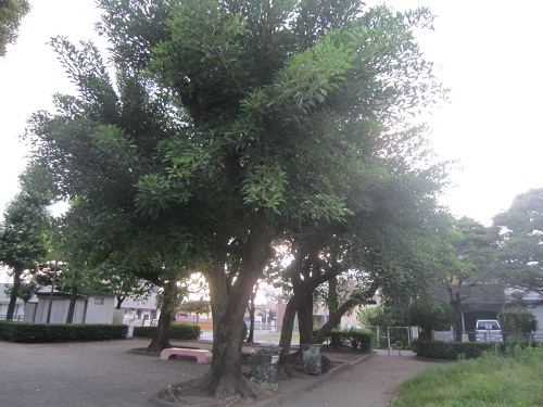 nene3528.jpg