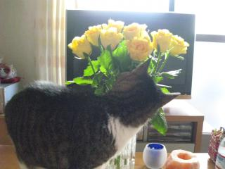 お花くんくん-1