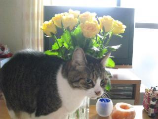 お花くんくん-2