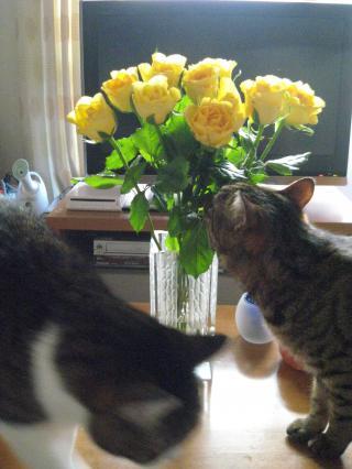 お花くんくん-3